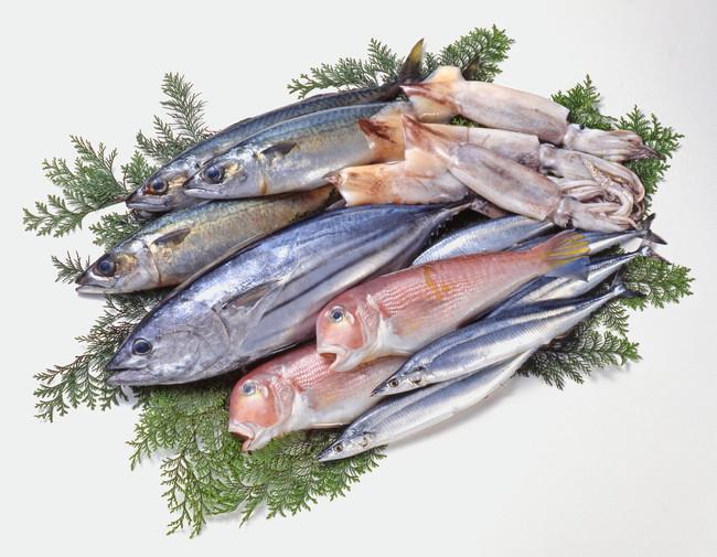 新鮮な魚の盛り合わせ
