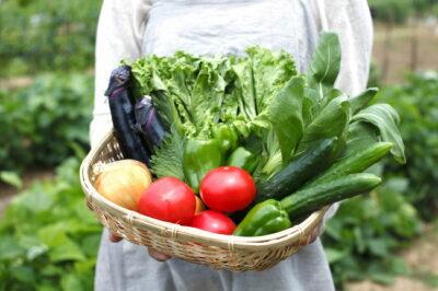 収穫直後の野菜