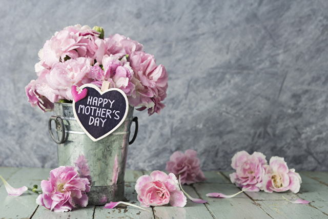 Pink carnation flowers in zinc bucket with happy mothers day