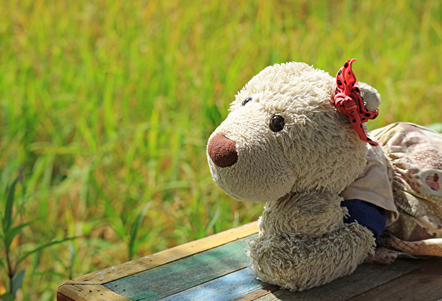 Relaxing in the sunlight beside the paddy field, a girl polar bear soft toy on wooden bench with blurred background