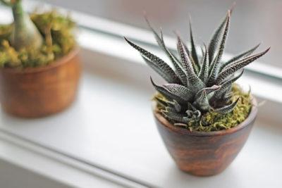 Succulent plants on window ledge in modern bathroom