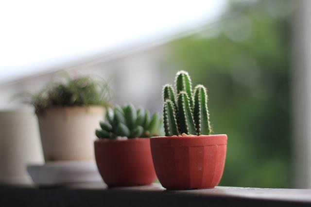 cactus in the terrace