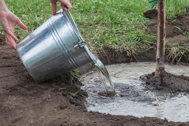 バケツで水を捨てる