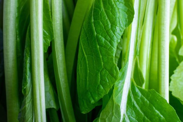 小松菜の葉と茎