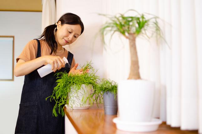 室内ガーデニングを楽しむ主婦