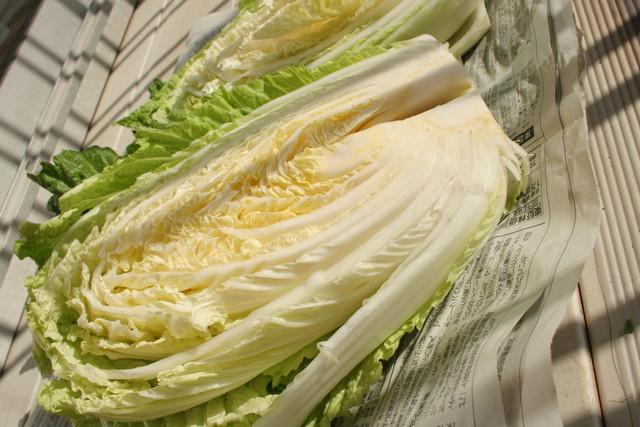 新聞に包まれた白菜