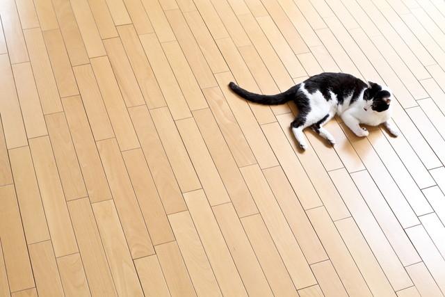 床暖房でくつろぐ猫