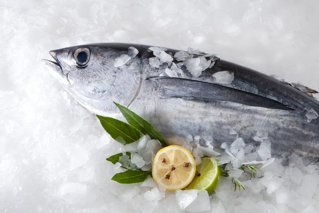 冷凍された魚