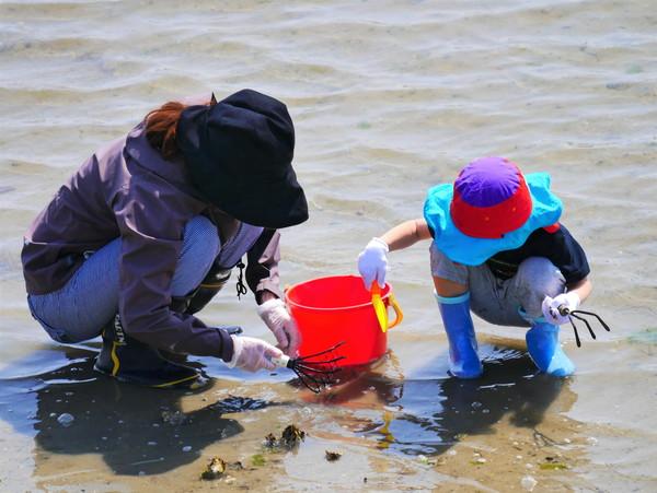 子供ふたり、赤いバケツにいっぱいの貝