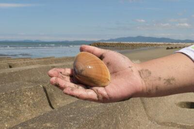 手のひらに大きな貝ひとつ